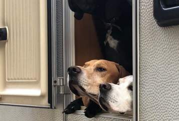 Hire a motorhome in Hamm from private owners| Hobby Doggy