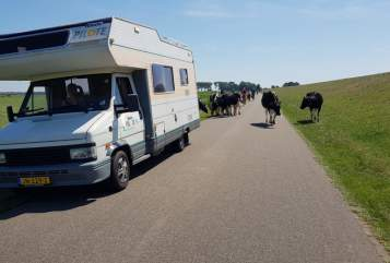 Hire a motorhome in Uden from private owners| Peugeot Pilote familiecamper
