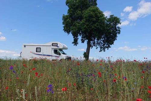 Hire a motorhome in Landau in der Pfalz from private owners| Ahorn Der Landauer